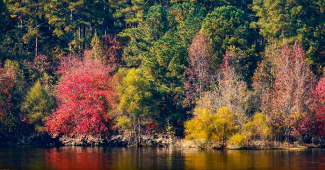 20+ Family-Friendly Fall Adventures in North Carolina's Triad and Triangle