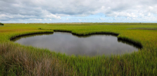 Marshlands at Carolina Beach State Park