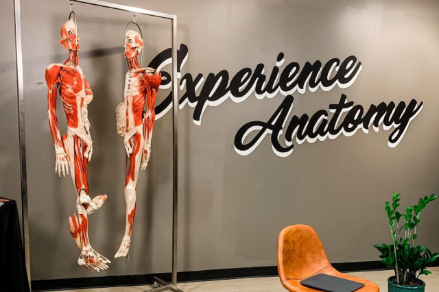 Experience Anatomy | Virtual Orthopedic Panel