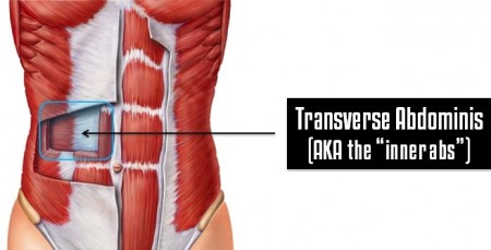 Why the Core Muscles are Different from Other Muscles